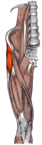 Tensor-fasciae-latae